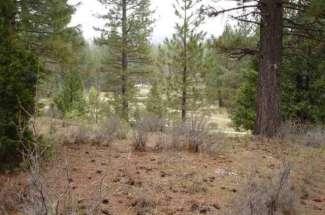 118 Saddle Ridge Road, Whitehawk Ranch
