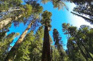 Plumas Pines & Johnsville